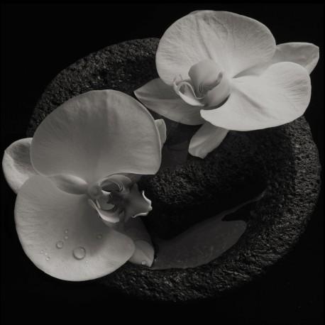 Patton & Vannier - Corpse Flower Lp Smoky Swirl Vinyl On 180 Gram